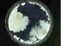 Тесты бактерии под - d8b21